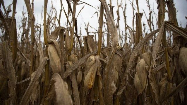 Family leaves 3-year-old behind overnight at corn maze