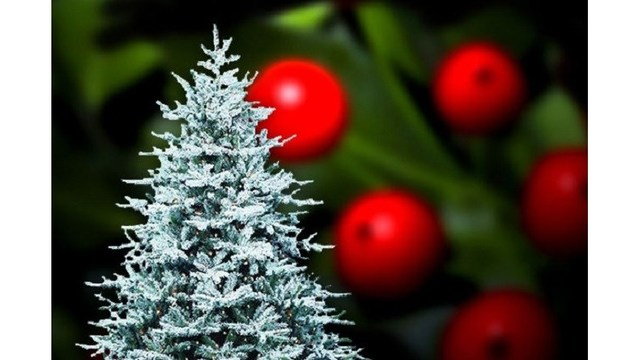 Christmas Charities.Christmas Charities Have Early Deadlines To Allow Time To
