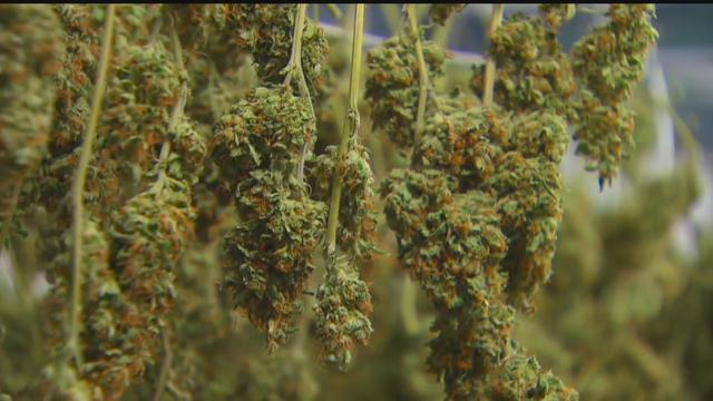 Marijuana grow site gets state approval to begin planting