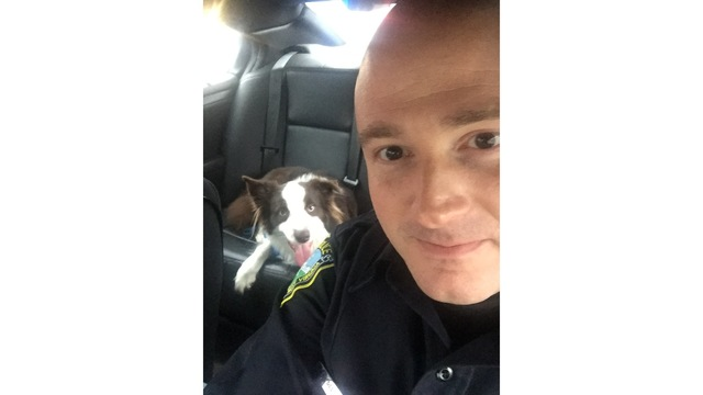Pup involved in Charleston, WV car crash pals up to police