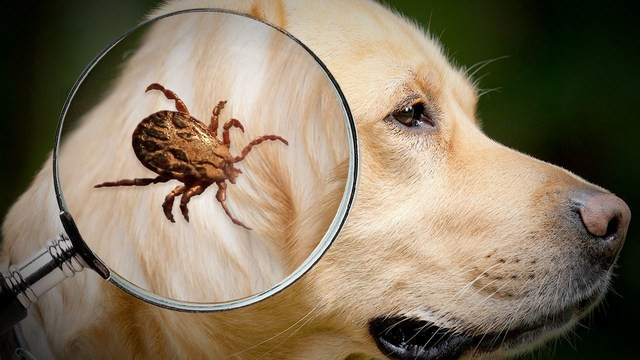 2018 expected to be severe flea and tick season for pets