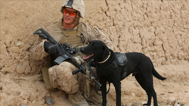 Service dogs actually help veterans with PTSD, new study says
