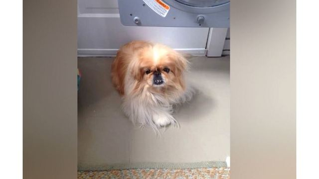 Parkersburg, WV groomer uses CPR to revive lifeless dog