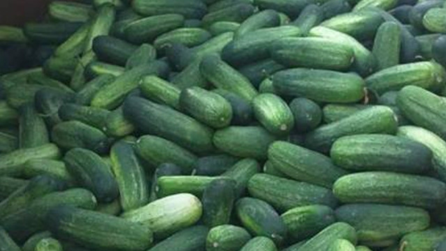 Ohio trucking company giving away 40,000 pounds of cucumbers
