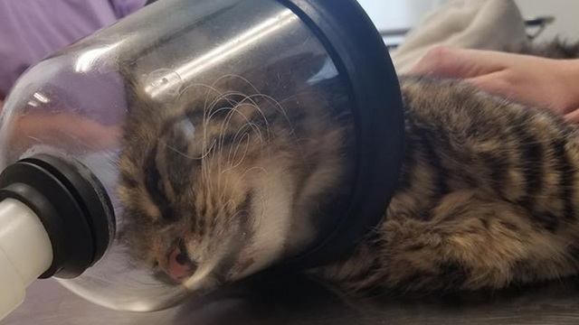 Reward offered for arrest of person who lit firecracker in cat's rectum